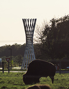 nature, animal, bison, sculpture, Tractricious