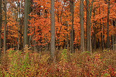 nature, trees, woods, fall, autumn