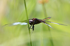 nature, animal, insect, dragonfly
