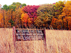 nature, autumn, fall, trees, Interpretive Trail