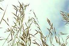 nature, prairie, grass, plants