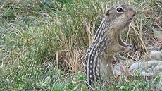 nature, mammals, animals, squirrel