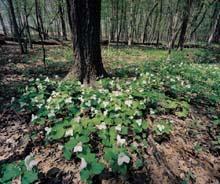Fermilab woods
